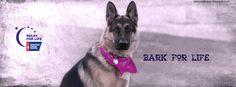 American Cancer Society Bark For Life relaywallpaper.blogspot.com