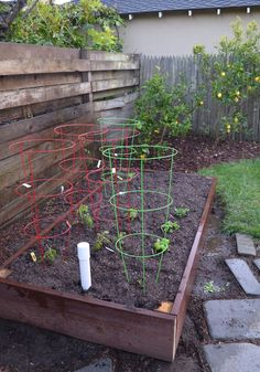 4 foot x 8 foot wicking planting bed full of tomatoes, zucchini, snap peas, herbs, lettuce and bunching onions. Wicking Beds, Tomato Cages, Snap Peas, Onions, Lettuce, Garden Plants, Planting, Garden Landscaping, Tomatoes