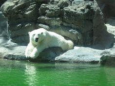Polar Bear~~~~This is for Bailey!!