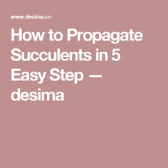 How to Propagate Succulents in 5 Easy Step — desima