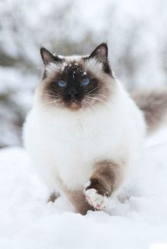 Cat - Winter - Snow