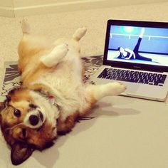 15 Animals Working Out (HuffPost Slideshow)