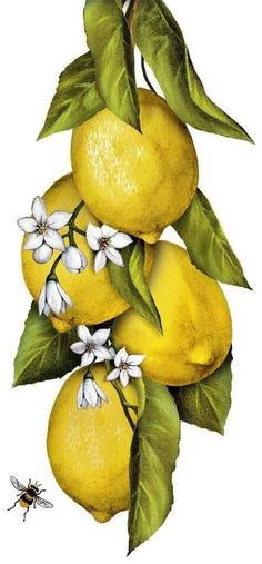 Hanging Lemons (Mary Lake Thompson)