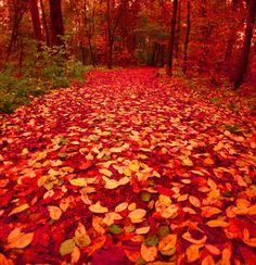 leaves, leaves, everywhere