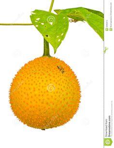 Healthy Fruits Live healthy myherbalmart.com