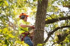 What is Local Tree Cutting Service?