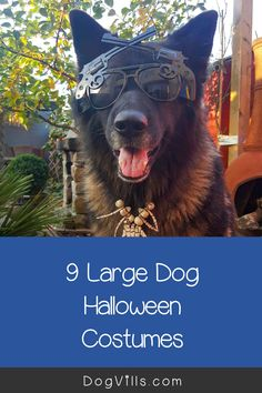 Dress your dogs (even your Great Dane) in one of these Large Dog Halloween Costumes For Boy Dogs. Dog Halloween Costumes, Boy Costumes, German Shepherd Pictures, German Shepherds, Diy Dog Toys, Boy Dog, Dog Training Tips, Large Dogs, Dog Treats