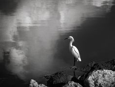 Patience In Black And White  Sanibel Island, FL