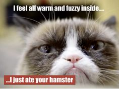 Enjoy these hilarious grumpy cat memes that will make you laugh your face off! Animal Jokes, Funny Animal Memes, Cute Funny Animals, Funny Animal Pictures, Funny Cute, Cute Cats, Hilarious, Funny Kitties, Animal Funnies