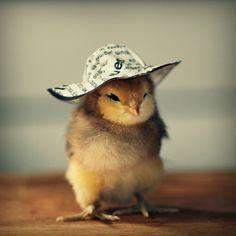 Pollo con sombrero