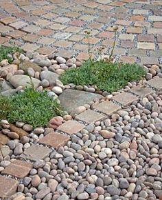 GAP Gardens - Drought tolerant planting amongst pebbles - Image No: 0181843 - Photo by Jenny Lilly Seaside Garden, Coastal Gardens, Garden Paths, Garden Landscaping, Landscaping Ideas, Drought Tolerant Landscape, Garden Floor, California Garden, Cottage Garden Plants