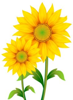 Sunflower PNG Clipart Picture Pinterest