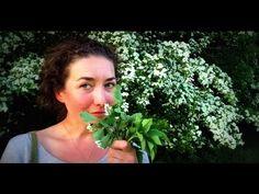 Jedlé jarní bylinky - hloh, bršlice kozí noha, bez černý, svízel přítula… Youtube, Medicine, Youtubers, Youtube Movies