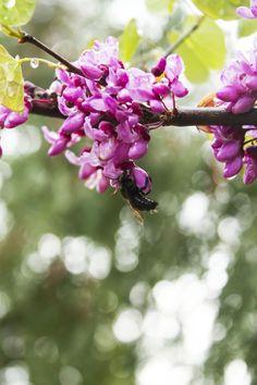 Santa Barbara Botanic Garden - Claire Laminen Photography