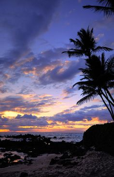 Maui palms Photograph by James Roemmling