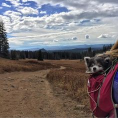 Instagram post by Camping With Dogs® • Oct 8 ffd8a17a4f