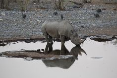 """Os """"Big"""" do Etosha Zebras, Safari, Camping, Elephant, Big, Animals, African Elephant, Hyena, Elephants"""