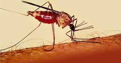 Scientists discover exact receptor for DEET that repels mosquitoes.