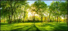 Springtime Warmth II by FramedByNature.deviantart.com on @DeviantArt