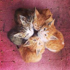Kitten convention.