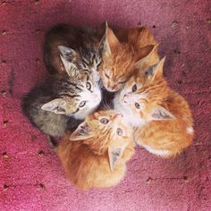 Kitten convention.