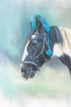 Gypsy Horse, Wall Art For Sale, Winter Hats, Instagram Images, Teal, Canvas Prints, Horses, Black And White, Artwork