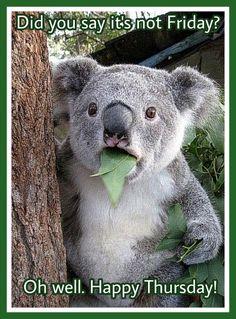 Funny Happy Thursday : funny, happy, thursday, Happy, Thursday, Ideas, Funny, Animals,, Thursday,, Animals