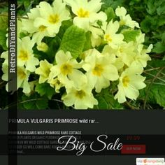 10% OFF on select products. Hurry, sale ending soon!  Check out our discounted products now: https://orangetwig.com/shops/AAB5v98/campaigns/AACeg99?cb=2016004&sn=RetroDIYandPlants&ch=pin&crid=AACeg8X&utm_source=Pinterest&utm_medium=Orangetwig_Marketing&utm_campaign=SPRING_GARDEN_PLANTS