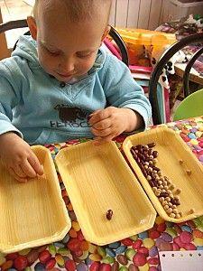 Plateau Montessori - tri des graines