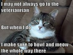 I may not always go to the veterianrian But when I do I make sure to howl and meow the whole way there