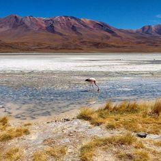 On instagram by nessanumenese #landscape #contratahotel (o) http://ift.tt/2sL1IsN Cañapa Bolivia  #bolivia #lake #nature  #sky #travelling #travel #traveller #instagood #instatravel #igers #igdaily #igworldclub #instalike #potosi #laguna #trip #travelgram #travelphotography #travellife #traveltheworld #adventures #lonelyplanet #photography #altiplano #mountains #cordillera #onlyinsouthamerica #explore #explorebolivia