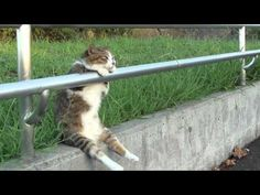 Cat leaning against a railing like a comtemplative human...    googletag.cmd.push(function() { googletag.display('div-gpt-ad-1334276104765-1'); });