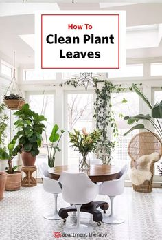 vintage home plants light minimalist scandinavian design dining chairs green Cute cats, gorgeous floors, boatloads of light and the dreamiest sunroom you've ever seen. Home Interior, Interior And Exterior, Interior Inspiration, Room Inspiration, Modern Conservatory, Glass Conservatory, Victorian Conservatory, Boston House, Exotic Homes