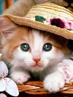 Cute Cat 1
