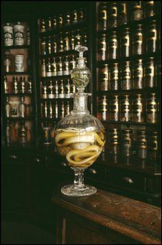 """Eau de vie de serpent"", a strong alcohol with a snake in the jar, originally used for medicine."