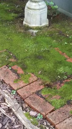 "I am trying to get the moss to completely cover this small brick patio; it has done very well this ""wet"" summer. Small Brick Patio, Brick Patios, Stepping Stones, Cover, Outdoor Decor, Green, Summer, Home Decor, Stair Risers"