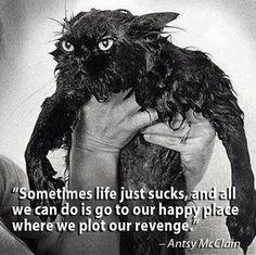 plot our revenge