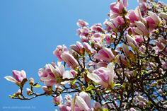 Budapest Central Parkja: tavasz a Margitszigeten | Életszépítők