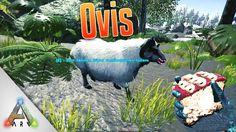 Ark Ovis zähmen - Schaf Aries Taming Location