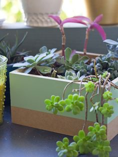 DIY Painted Succulent Planter Box | Lovely Indeed