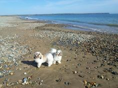 """See 281 photos and 2 tips from 459 visitors to Tramore Beach. """"When the tide is in, stand with your back to the sea and let the waves crash over. Amusement Park, Maya, Pets, Beach, Water, Animals, Outdoor, Beautiful, Animals And Pets"""
