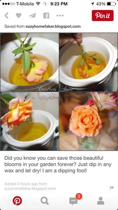 Neat way to preserve flowers- dip them in wax! Old scentsy tarts, ugly dollar store candles, etc, just melt them down and dip. Resin Flowers, Dried Flowers, Paper Flowers, Diy Arts And Crafts, Fun Crafts, Mod Podge Crafts, How To Preserve Flowers, Preserving Flowers, How To Dry Flowers