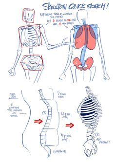 """blackggggum: """" just personal experience sharing im not really good at drawing bones but just having fun in the process the models are papyrus and the girl papyrus i designed before XDDD """" Figure Drawing Reference, Anatomy Reference, Art Reference Poses, Drawing Skills, Drawing Techniques, Drawing Tips, Body Drawing, Drawing Base, Anatomy Art"""