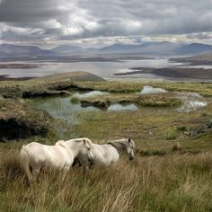 """There is an old Irish proverb: """"Sell the cow, buy the sheep, but never be without a horse."""" It pretty much sums up how the Irish feel about these incredible animals.World renowned for its affinity with the horse, Ireland is a nation of horsemen and women and the country has historically punched far above its"""