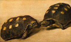 Albert Eckhout (circa Study of Two Brazilian Tortoises Circa 1640 Tempera and gouache on paper mounted on panel cm in). Width: 51 cm in). Albert Eckhout, Almeida Junior, Dutch Golden Age, The Hague, Tortoises, Tempera, Flora And Fauna, Rembrandt, Natural History