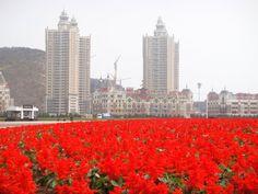 Dalian, China Dalian China, Seattle Skyline, San Francisco Skyline, World, Places, Flowers, Travel, Viajes, Destinations