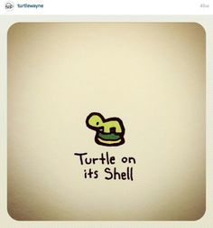 So freaking cute Cute Turtle Drawings, Animal Drawings, Cute Drawings, Tiny Turtle, Turtle Love, Cute Turtles, Baby Turtles, Pretty Art, Cute Art