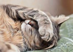 Que faire lorsque mon chat vomit ? Est-ce grave ? Détecter les causes bénignes et graves du vomissement du chat. Remèdes naturels contre chat qui vomit.