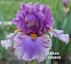 Iris 'Crash Course'