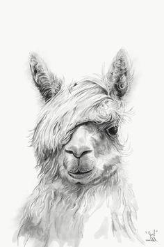 Llama Acrylic Prints and Llama Acrylic Art Alpaca Images, Alpaca Pictures, Pencil Drawings Of Animals, Animal Sketches, Alpacas, Funny Llama Pictures, Alpaca Drawing, Llama Arts, Colouring Pics